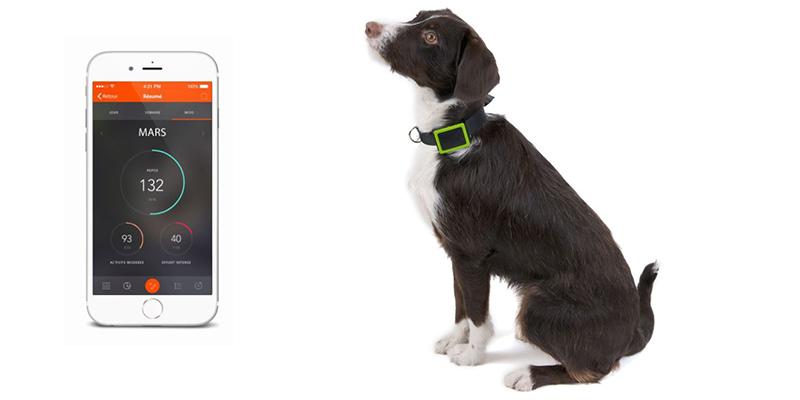 Traceur GPS pour chien